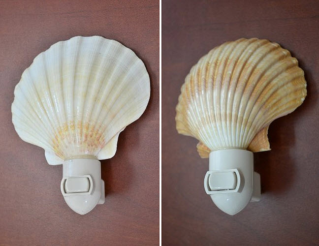 Real seashell night light